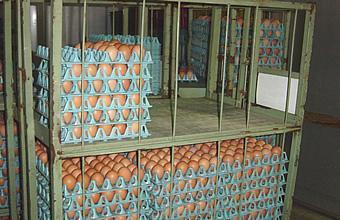 卵の集荷・搬入