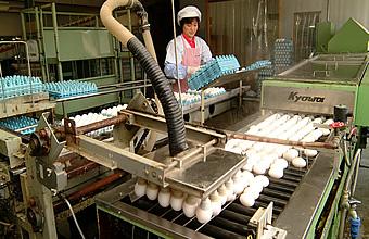 洗卵工程へ